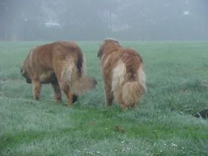 Yazz & Yett in de mist