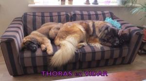 Vidar & Thoras