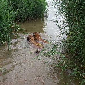 Yett & Yazz zwemmen even een ererondje voor Lorens